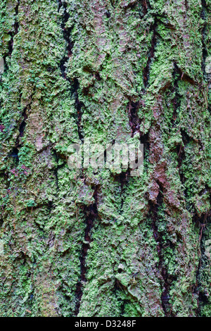 Abstract image of bark on a Douglas Fir tree - Stock Photo