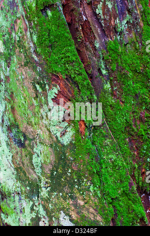 Abstract image of a decaying tree stump in a coastal rain forest - Stock Photo