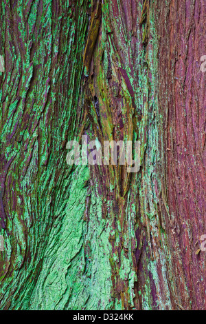 Abstract textural image of Western Red Cedar bark - Stock Photo