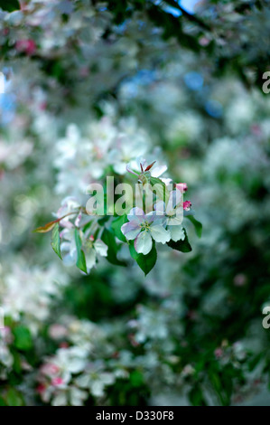 Close-up of flower blossoms - Stock Photo