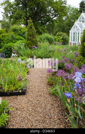 Pathway through the borders to the greenhouse, England Kent. - Stock Photo