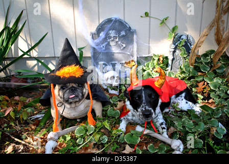 Two cute dogs dressed up in Halloween costumes. - Stock Photo