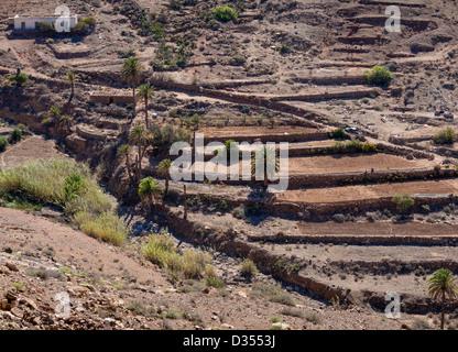 An oasis in the Parque Rural de Betancuria, Fuerteventura. - Stock Photo