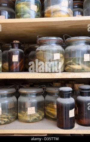 Dead fish in jars. - Stock Photo