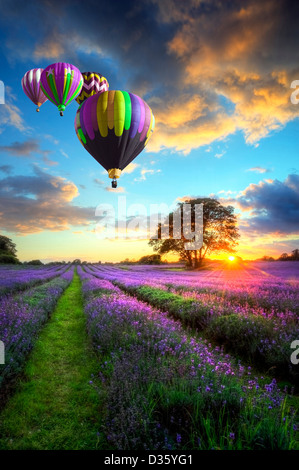 Hot air balloons flying over beautiful lavender fields during stunning Summer sunset - Stock Photo
