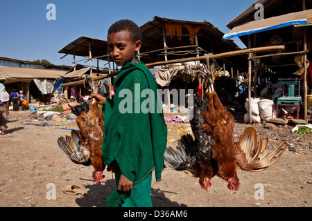 Boy selling chickens, The Saturday Market, Bahir Dar, Ethiopia - Stock Photo