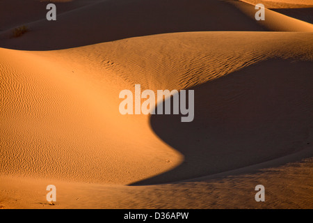Algodones Dunes or Imperial Sand Dunes, Imperial County, California, United States of America, USA - Stock Photo