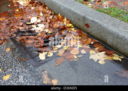 fallen autumn leaves blocking storm water run off drain Vancouver BC Canada - Stock Photo