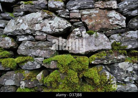Partly moss-covered drystone wall near Killin, Scotland - Stock Photo