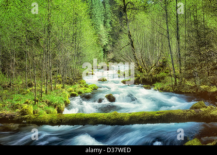 Roaring River with new Spring growth. Oregon. - Stock Photo