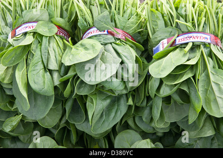Spinach 'Spinacia oleracea' harvest, field pack. - Stock Photo