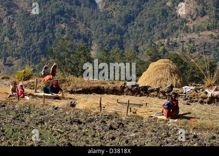 agriculture in the himalayas of nepal essay