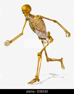 Digitally generated image of running human skeleton - Stock Photo