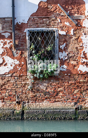 Venitian window - an old brick wall with flaking plaster along one of venice's canals inset with an equally old - Stock Photo