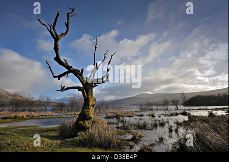 Bare winter tree outlined against still water and blue sky - Stock Photo