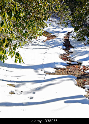 A snow covered hiking trail with deer tracks. - Stock Photo