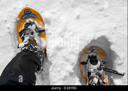 Close up of walker wearing snowshoes on feet while snowshoeing in deep powdery snow in winter - Stock Photo