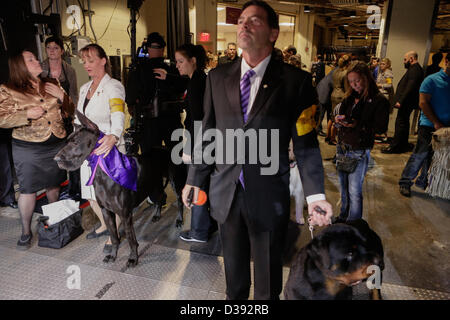 New York City, US, 12 February 2013. Working dogs and their handlers wait in the wings at the 137th annual Westminster - Stock Photo