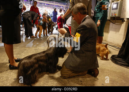 New York City, US, 12 February 2013. Dogs and handlers wait in the wings at the 137th annual Westminster Kennel - Stock Photo