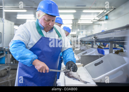Production line of workers filleting fish in food factory - Stock Photo