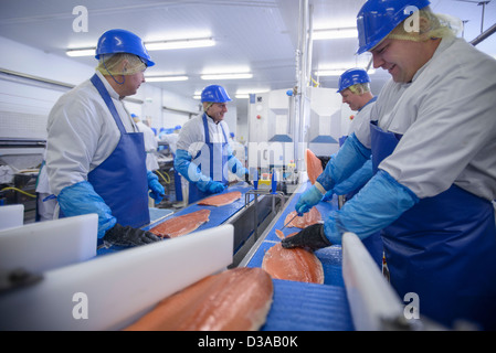Production line of workers filleting salmon in food factory - Stock Photo