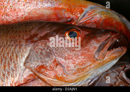 red snapper fish food good tasting beach market Mexico - Stock Photo
