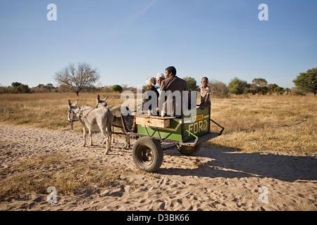 Traditional bushmen driving on donkey cart - Stock Photo
