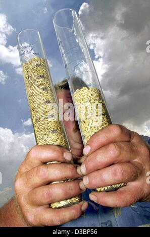 (dpa) - Farmer Franz-Josef Schaeublein holds up two filled glass tubes of barley, which is used for beer brewing, - Stock Photo