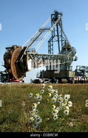 (dpa) - A view past a shrub of camomile (front), across a green field towards a giant bucket-wheel excavator (back) - Stock Photo