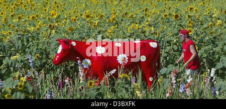 (dpa) - A holidaymaker walks through a field of sunflowers past a artistically decorated red cow in Purkhof, Germany, - Stock Photo