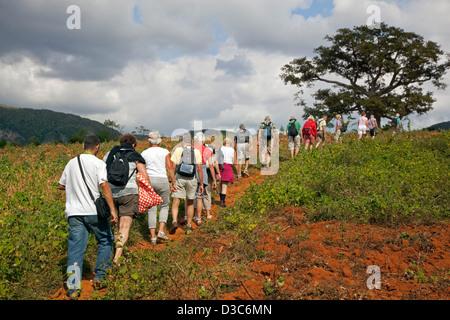 Tourists exploring the Viñales Valley / Valle de Viñales in the Sierra de los Organos, Pinar del Río, Cuba, Caribbean - Stock Photo