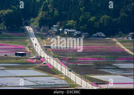 Roadway through flooded rice paddies bordered with purple spring flowers in countryside of Fukui viewed from Kameyama - Stock Photo
