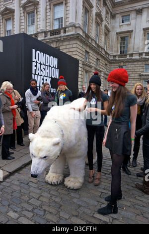 Greenpeace Polar bear visits London Fashion Week 15th February 2013 Somerset House, London, England, UK, GB - Stock Photo