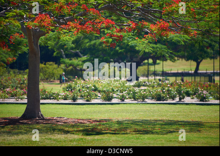 New Farm Park, QLD Australia - Stock Photo