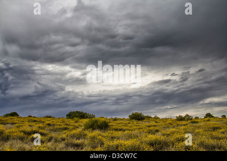 he Southern section of Addo Elephant National Park On a stormy and moody afternoonin South Africa - Stock Photo