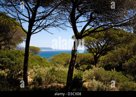 Breña Natural Park pine forest Atlantic Ocean Barbate Costa de la Luz Cádiz Andalusia Spain - Stock Photo