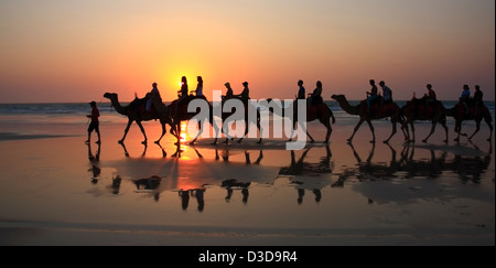 Camels at Sunset Cable Beach Broome Australia