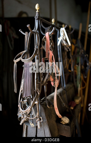 LA RUIZA FINCA, HUELVA, SPAIN, 21st FEBRUAY 2008: Horse bridles hang in the stables at La Ruiza ranch where the - Stock Photo