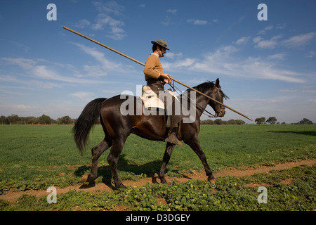 LA RUIZA FINCA, HUELVA, SPAIN, 21st FEBRUAY 2008:  Don Tomas Prieto de la Cal, 41, sets off to work with his herd - Stock Photo