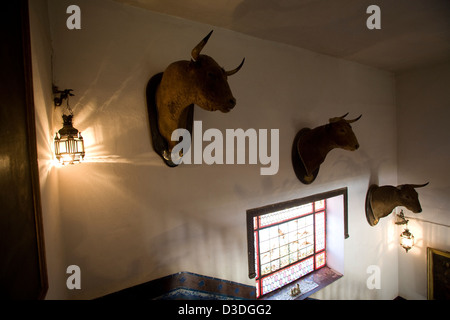LA RUIZA FINCA, HUELVA, SPAIN, 21st FEBRUAY 2008: A collection of mounted bulls heads line the staircase in the - Stock Photo