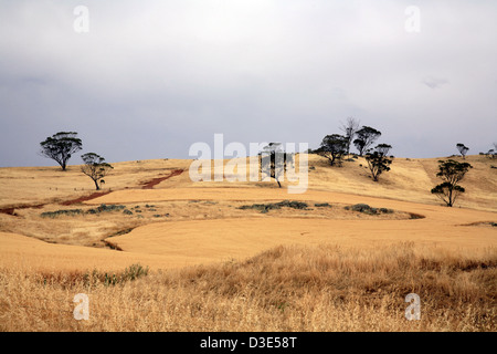 Wheatbelt Western Australia - Stock Photo