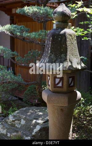 An unusual tall, skinny stone lantern and a manicured matsu pine tree in a Japanese landscape garden.