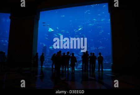 People standing in front of a large glass wall looking at the fish life in the huge fish tank in the Atlantis Palm - Stock Photo