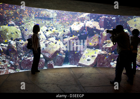 Visitor poses next to the aquarium fish tank in the Atlantis Palm hotel Dubai UAE as a photographer takes a picture. - Stock Photo