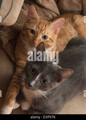 Two four month old kittens cuddling in a chair together - Stock Photo