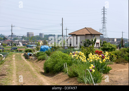 Vegetable and flower gardens contrast with high-tension power lines in the rural countryside of Kanagawa Prefecture. - Stock Photo