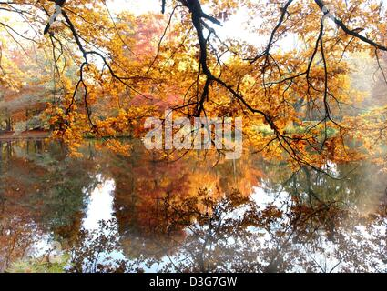 (dpa) - Autumnal trees are reflected in a pond in the Berliner Tiergarten park in Berlin, 7 November 2003. - Stock Photo