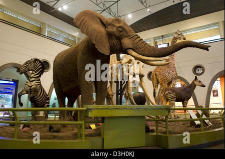 The Great Hall of mammals, Nairobi National Museum, Nairobi, Kenya - Stock Photo