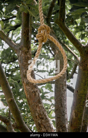 A noose hangs from an apple tree in a garden. - Stock Photo