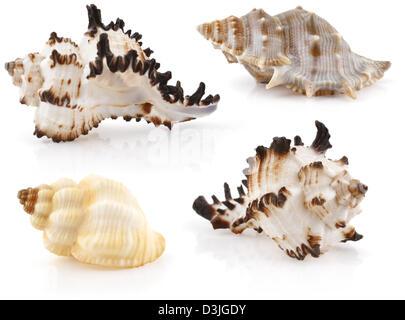 Set of sea cockleshells isolated on white - Stock Photo